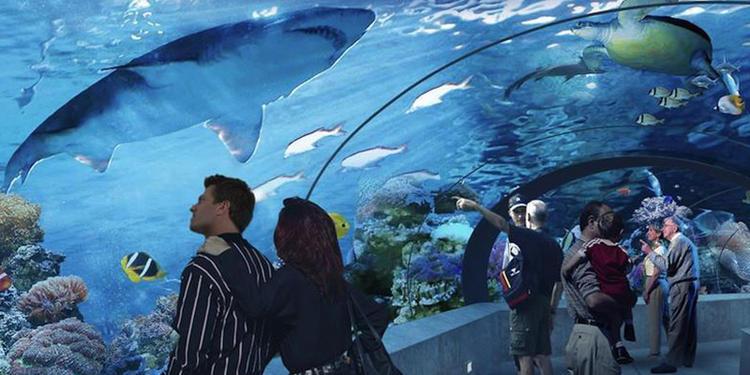 Ripley's Aquarium of Canada | Alumni | University of Waterloo
