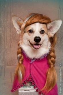 Dog with braids