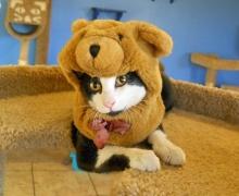 Cat in a bear hat
