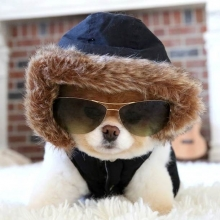 dog with sunglasses on and hood up