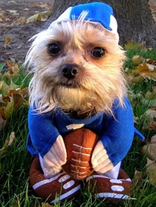 Dog in football uniform