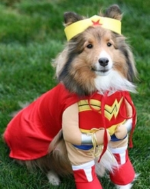 dog in a wonder women outfit