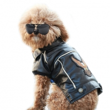 Dog in leather jacket and black sunglasses