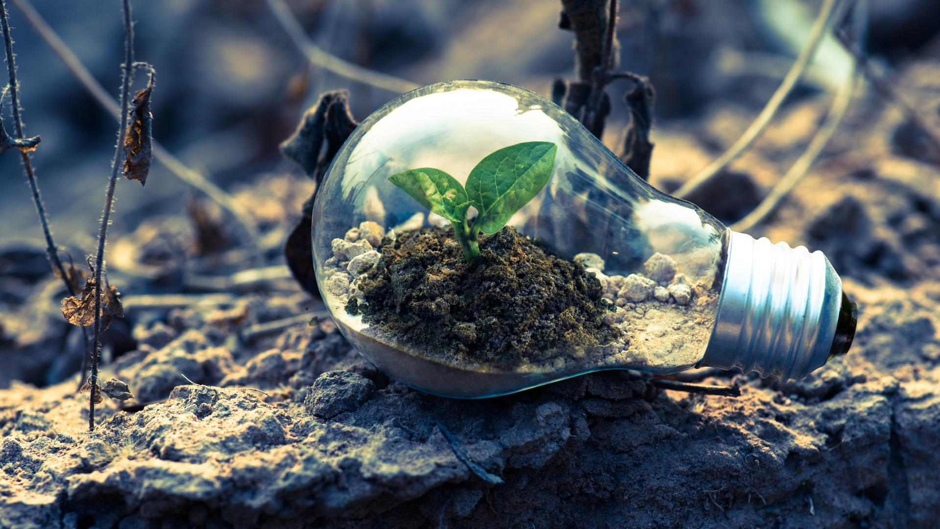 Bulb sustainability