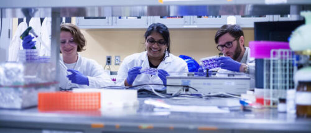 Graduate students in the lab working