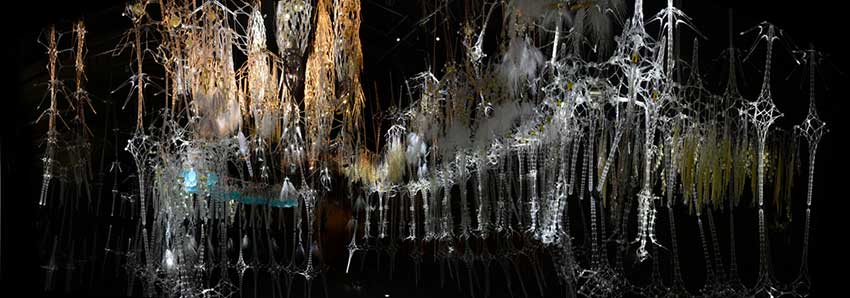 Epiphyte Chamber, Museum of Modern and Contemporary Art, Seoul, 2013