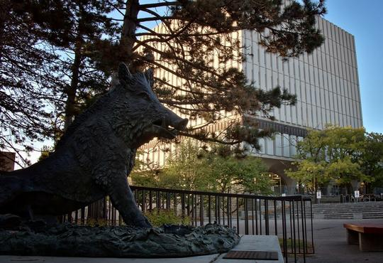 Boar sculpture with library building in the background