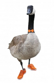 Image result for goose wearing shoes
