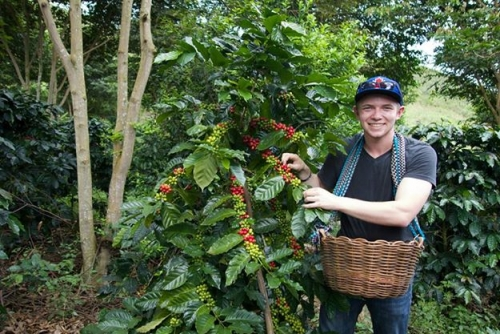 student wil schmor among coffee bean plants