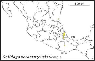 Solidago veracruzensis range Semple draft