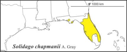 Solidago chapmanii range Semple draft