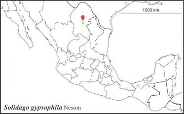 Solidago gypsophila, range, Semple draft