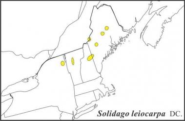 Solidago leiocarpa range Semple draft