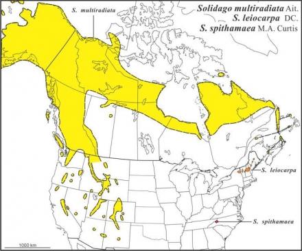 Solidago multiradiata-leiocarpa-spithamaea ranges Semple draft