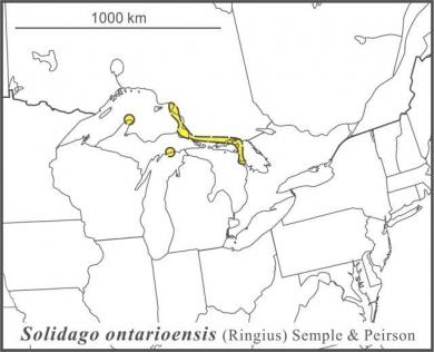 Solidago ontarioensis range Semple draft