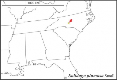 Solidago plumosa range Semple draft