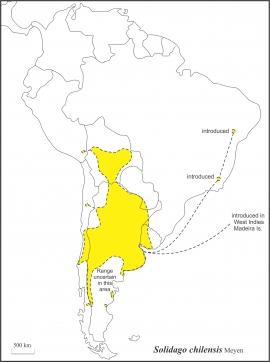 Solidago chilensis range draft JCS