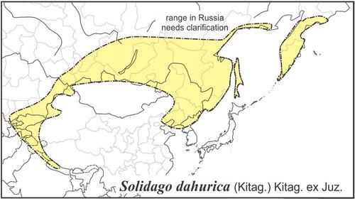Solidago dahurica range draft JCS