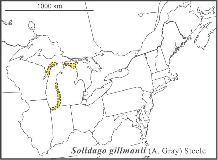 Solidago gillmanii range Semple draft