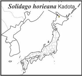 Solidago horieana range draft JCS