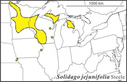 Solidago jejunifolia range Semple draft