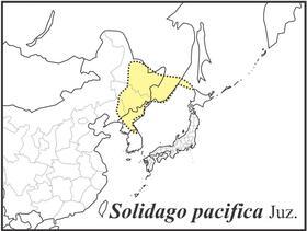 Solidago dahurica range draft JC