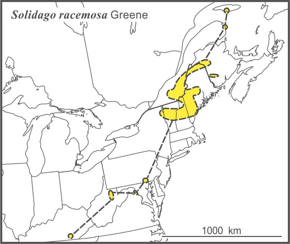 Solidago racemosa range draft Semple