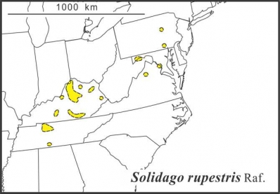 Solidago rupestris range Semple draft