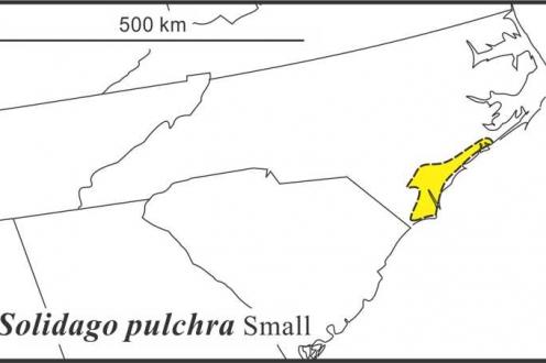 Solidago pulchra range Semple draft