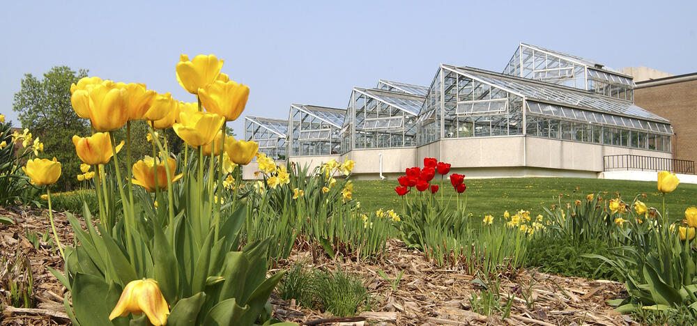 Biology greenhouse with yellow and red tulips in the foreground