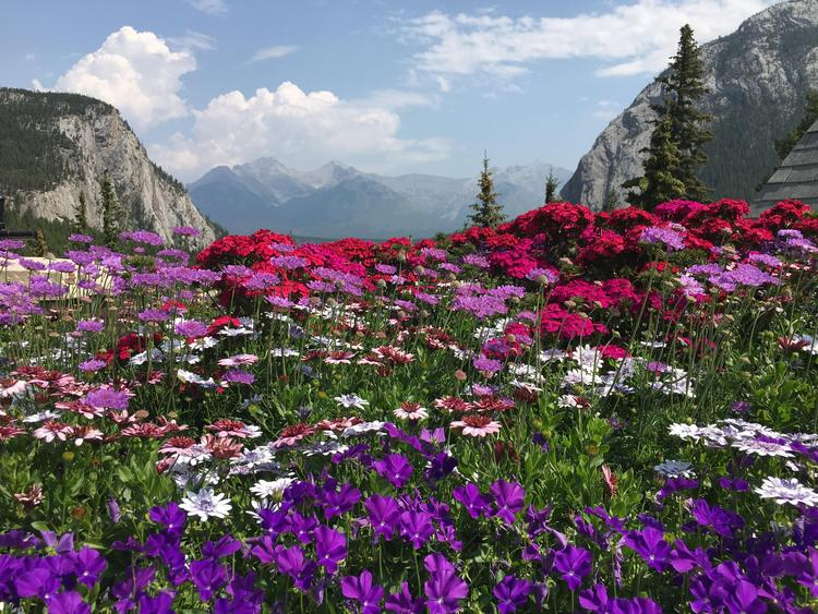 mountains and flowers, Banff, Alberta