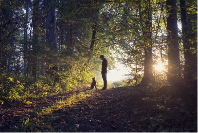 Sunlit forest image