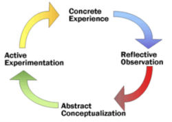 concrete experience, reflective observation, abstract conceptualization, and active experimentation