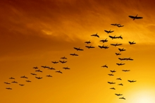 "A flock of birds excercising teamwork by flying in a ""V"" formation to minimize an individuals work"