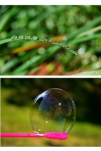 Grass with water droplets; bubble on a bubble wand.