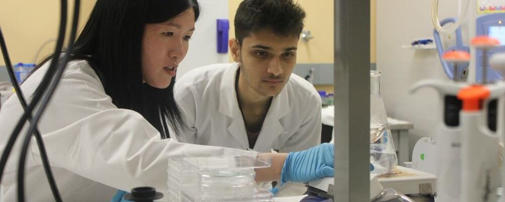 Professor Evelyn Yim working in her lab with a student.