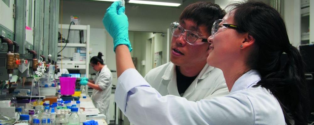 Students working in Michael Tam's lab.