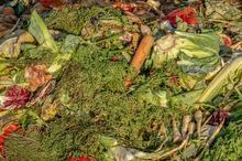 Vegetable food waste
