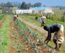 Kenyan students working in agriculture