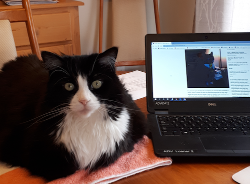 K the cat sits next to a laptop featuring the Daily Bulletin.