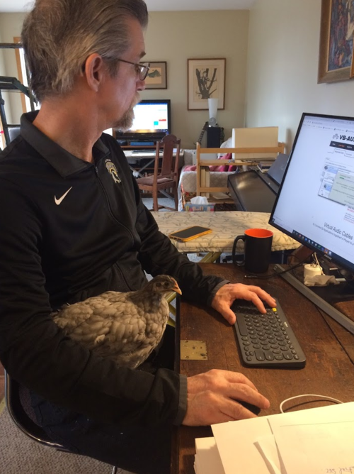 Scott Nicoll works at his computer with a bird tucked under his arm.