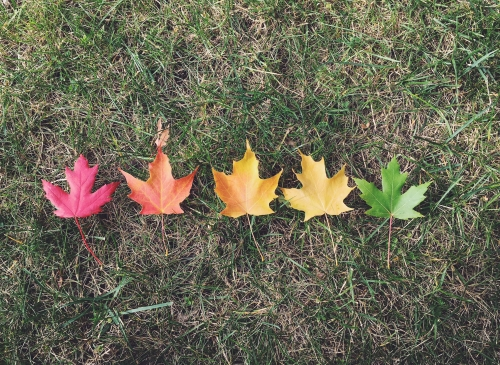 Multicoloured leaves on grass.