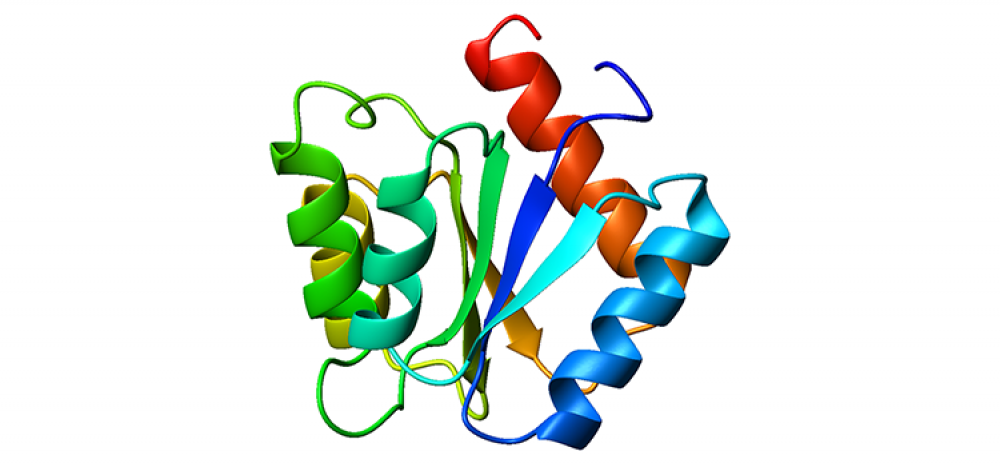 A folding protein.