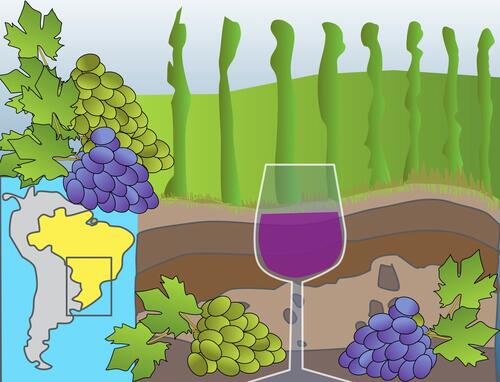 Illustration of a map showing Southern Brazil, alongside grapes and a glass of wine