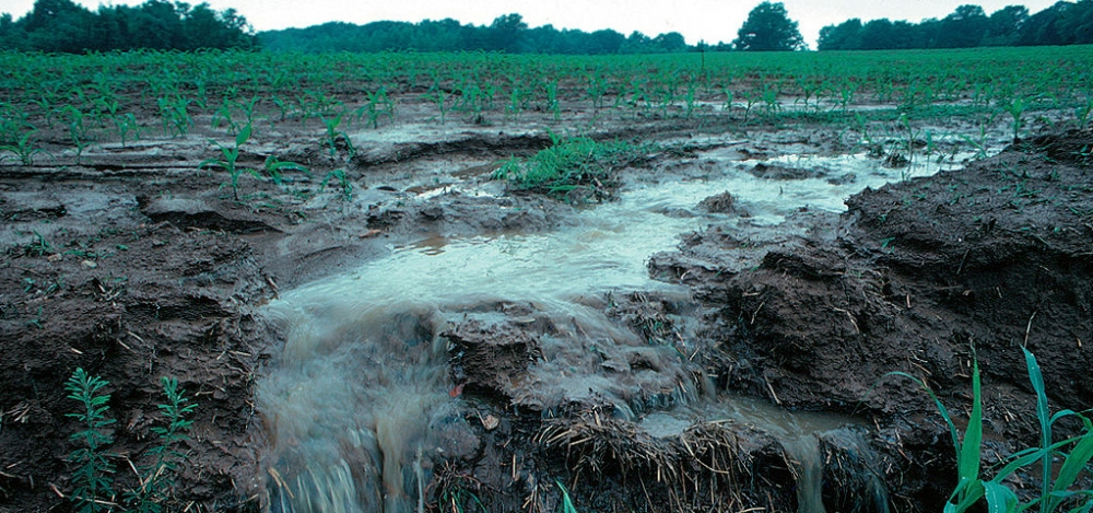 Runoff from an agricultural field.