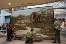 Mastadon image being hung by plant operations in the Earth Sciences Museum