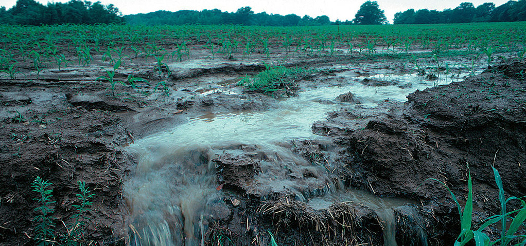 Soil runoff from a local field.