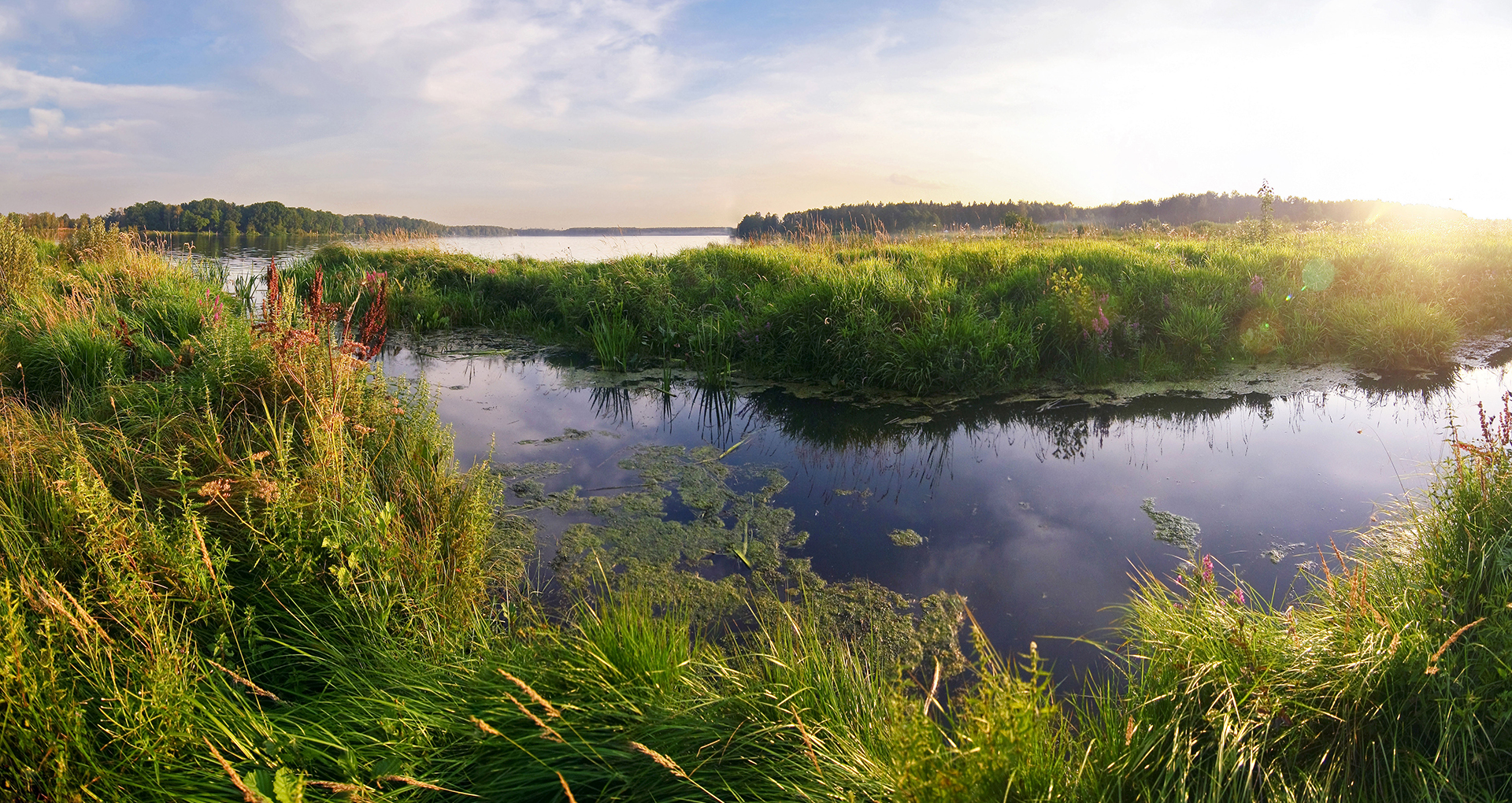 A wetland at sunset.