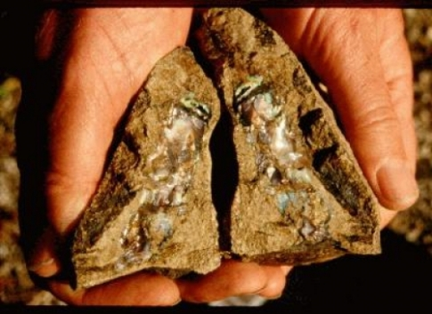two opal specimens held in hands