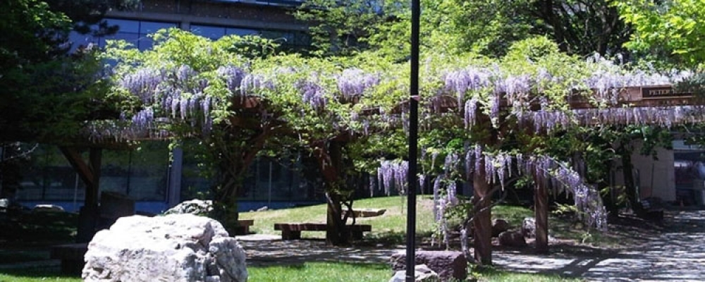 Peter Russell Rock Garden